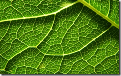 Leaf's Labyrinth